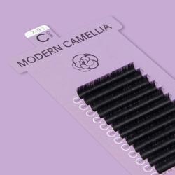 Modern Camellia