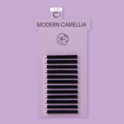MODERN CAMELLIA / C CURL
