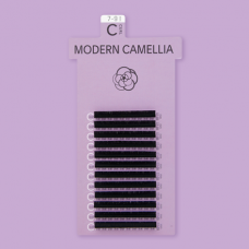 MODERN CAMELLIA / D CURL