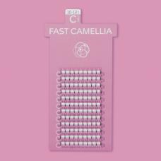 FAST CAMELLIA / C CURL